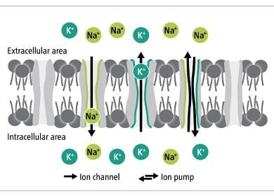 wirkung-der-behandlung-mit-einem-magnetolith-auf-das-zellinnere